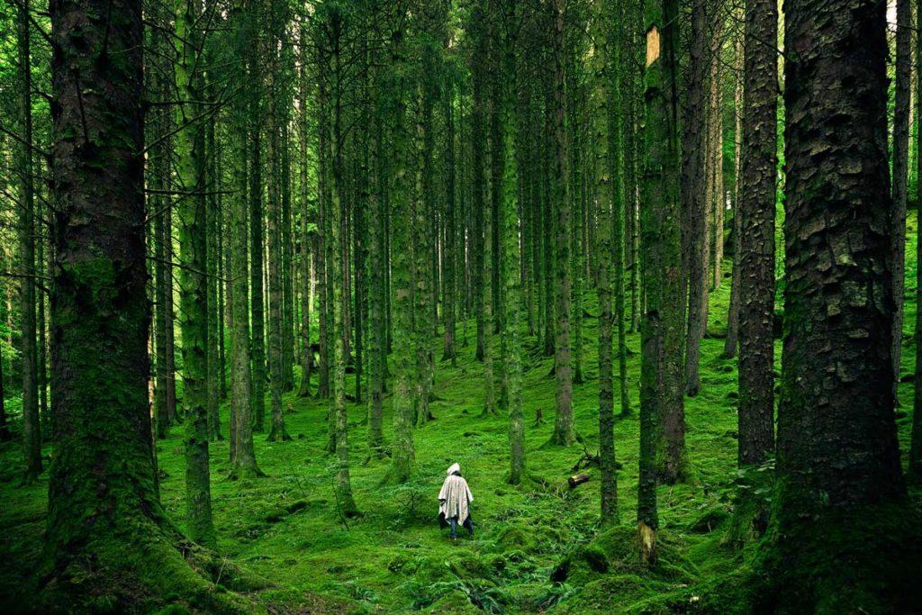 rich forest floor
